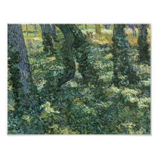 Vincent van Gogh - Undergrowth Photo Print