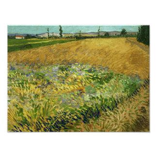 Vincent van Gogh - Wheatfield Photo