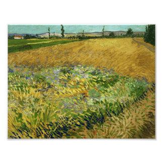 Vincent van Gogh - Wheatfield Photographic Print