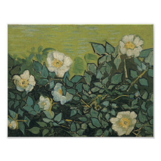 Vincent van Gogh - Wild Roses Photographic Print