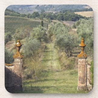 Vineyards, Tuscany, Italy Coaster