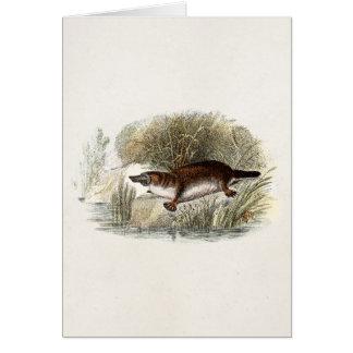 Vintage 1800s Duck Bill Platypus Illustration Card