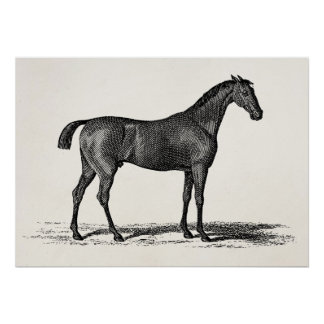 Vintage 1800s English Race Horse - Racing Horses Poster