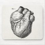 Vintage 1800s Heart Retro Cardiac Anatomy Hearts