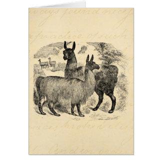 Vintage 1800s Llama Retro Pink Llamas Template Note Card