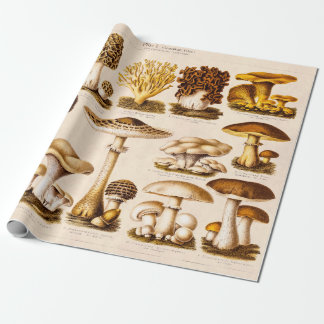 Vintage 1800s Mushroom Variety  Mushrooms Template Wrapping Paper