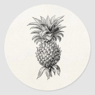 Vintage 1800s Pineapple Illustration Pineapples Classic Round Sticker
