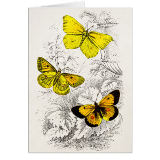 Vintage 1800s Yellow Orange Butterflies Template Note Card