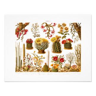 Vintage 1911 Cactus Flower Old Floral Illustration Invitation