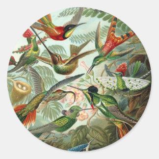 Vintage Artist Ernst Haeckel Classic Round Sticker