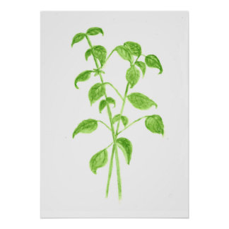 Vintage basil watercolor illustration print