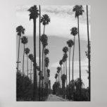 Vintage Black & White California Palm Trees Photo Poster