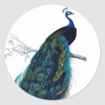Vintage Blue Elegant Colourful Peacock Round Stickers