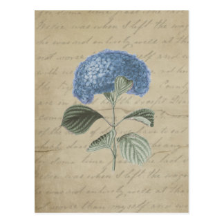 Vintage Blue Hydrangea with Antique Calligraphy Postcard