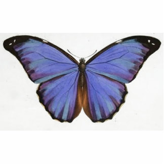 Vintage Blue Purple Butterfly Standing Photo Sculpture