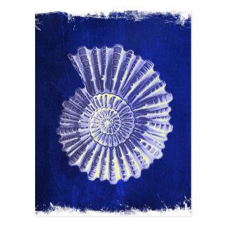 vintage botanical Coastal Blue White seashell Postcard