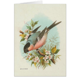 Vintage - Bullfinch Illustration Card