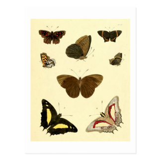 Vintage Butterflies #1 Change of Address Card Postcard