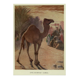 Vintage Camel Painting (1909) Poster