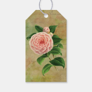 Vintage Camellia French Botanical