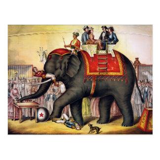 Vintage Circus Elephant Postcards