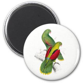 Vintage Crimson Winged Parakeet 6 Cm Round Magnet