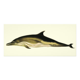 Vintage Dolphin, Marine Life Animals and Mammals Rack Card Design
