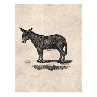 Vintage Donkey Illustration -1800's Donkeys Postcard