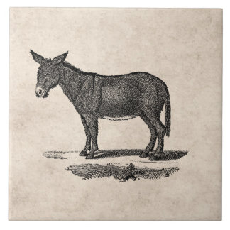 Vintage Donkey Illustration - 1800's Donkeys Tile