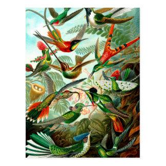 Vintage Ernst Haeckels Kunstformen der Natur, Bird Postcard