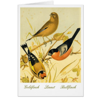 Vintage Finch Trio on Antique Lithograph Card