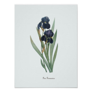 Vintage Floral Illustration Botanical Art Print