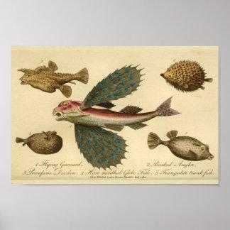 Vintage Flying Fish Natural History Print