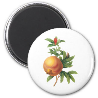 Vintage Food Fruit, Pomegranate by Redoute Magnet