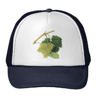 Vintage Food Fruit, White Wine Grapes on the Vine Mesh Hats