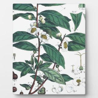 Vintage Green Tea Botanical Print Plaque
