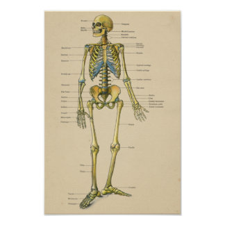 Vintage Human Skeleton Anatomy Chart