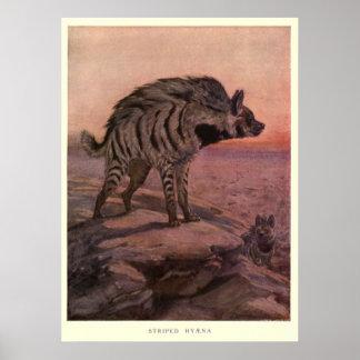 Vintage Hyena Painting (1909) Poster
