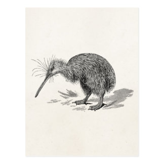 Vintage Kiwi Bird Antique Birds Template Postcard