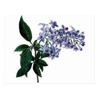 Vintage lilac postcard