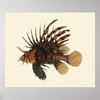Vintage Lionfish Fish, Marine Ocean Life Animal Poster