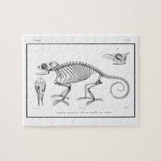 Vintage lizard skeleton jigsaw puzzle