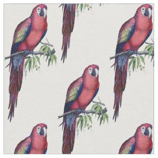 Vintage Macaw Bird