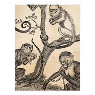 Vintage Monkey Illustration - 1800's Monkeys Photo Print