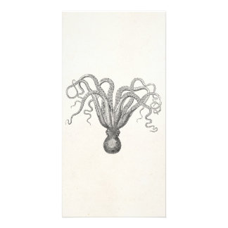 Vintage Octopus Poulpe Eight Armed Cuttle Fish Photo Card Template