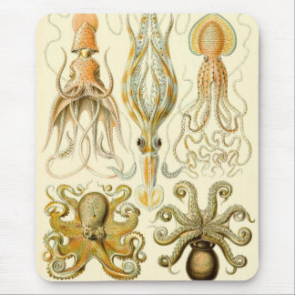 Vintage Octopus Squid Gamochonia by Ernst Haeckel Mouse Pad