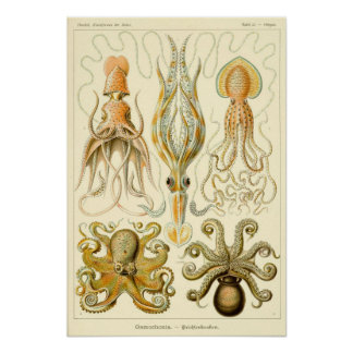 Vintage Octopus Squid Gamochonia by Ernst Haeckel Poster