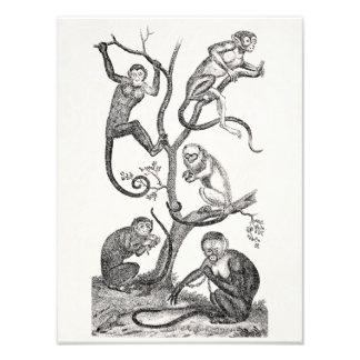 Vintage Orange Monkey Illustration1800's Monkeys Photo Print