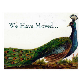 Vintage Peacock Change of Address Postcards