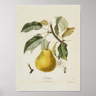 Vintage Pear Poster